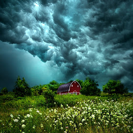 Riding The Storm Out by Phil Koch - Landscapes Prairies, Meadows & Fields ( natural light, vertical, wisconsin, yellow, leaves, storm, phil koch, spring, sun, photography, sky, nature, tree, autumn, weather, severe, horizons, flower, office, clouds, orange, wind, extreme, park, green, twilight, agriculture, horizon, scenic, morning, portrait, shadows, wild flowers, field, dawn, red, blue, serene, sunset, peace, fall, meadow, summer, trees, sunrise, landscapes, floral,  )