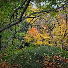 Fall Color at the Ledges Overlook, Cuyahoga Valley National Park by Martin Belan - Landscapes Forests ( cuyahoga valley national park, fall, the ledges overlook, trees, autumn color, fall color,  )