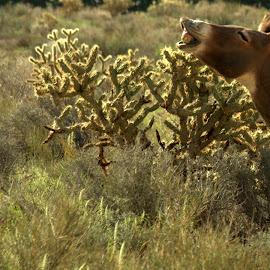 Cheeeese!  by Daniel Hackett - Animals Horses ( las vegas, red rock canyon, happy, burro, wildlife,  )