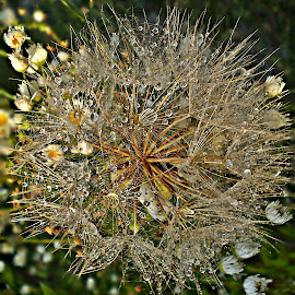 Prelude To Spring by Marija Jilek - Nature Up Close Other plants