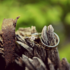 Rings  by Shaylece Summarell - Wedding Bride ( object, artistic, jewelry )