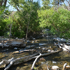 Creek by Lindsey Jantz - Landscapes Forests ( water, logs, creek, trees, landscape, rocks, river,  )