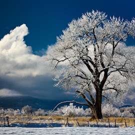 colorado, cottonwood, winter, snow, cedaredge by David Short - Landscapes Prairies, Meadows & Fields