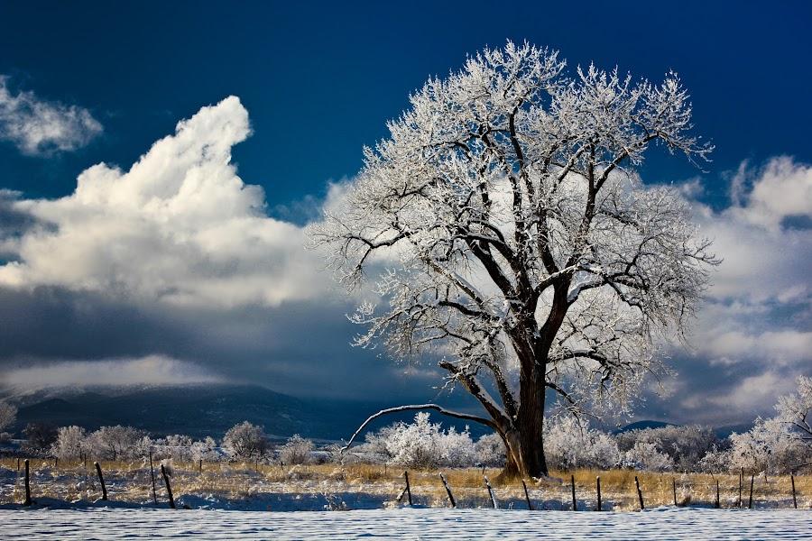 colorado, cottonwood, winter, snow, cedaredge by David Short - Landscapes Prairies, Meadows & Fields (  )