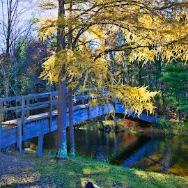 Fall Bridge by John Kehoe - City,  Street & Park  City Parks ( tree, fall colors, foot, creek, fall, path, ellow, bridge, river,  )
