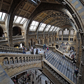 architectural drama at NHM London by Almas Bavcic - Buildings & Architecture Other Interior