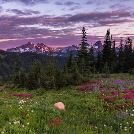 Totoosh Range by Christian Flores-Muñoz - Landscapes Prairies, Meadows & Fields ( national park, mountain, mount, trees, meadows, rainier, wild flowers )