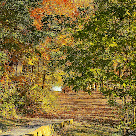 Autumn Path by Don Thurheimer - Landscapes Travel ( fall colors, autumn, fall, path, walk, color, colorful, nature )
