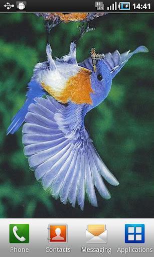 BirdLiveWallpaper