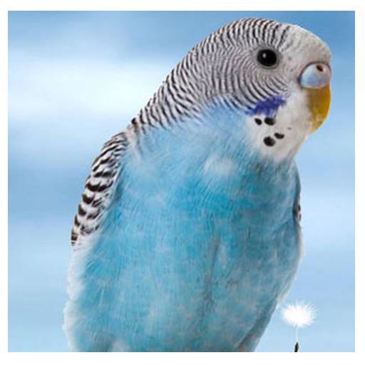 动物拼图 休閒 App LOGO-硬是要APP