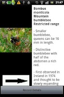 Screenshot of Identify Irish Bumblebees