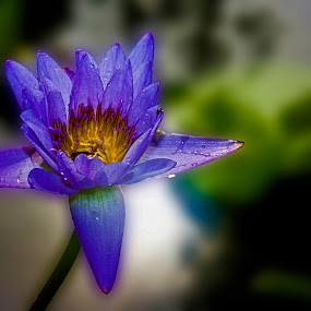 by Kokien Photography - Flowers Single Flower