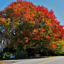 New England Autumn by Whitney Bowley - Nature Up Close Trees & Bushes