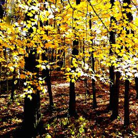 A Bright Path  by Jennifer Schmidt - Landscapes Weather ( minnesota, state parks, onamia, kathio, minnesota state parks,  )
