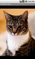 Screenshot of Кошки и коты