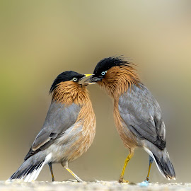 Some Intimate Moments..!! by Mukesh Chand Garg - Animals Birds (  )