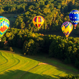 Hot Air Balloons by Carol Plummer - Transportation Other ( hot air balloon, trees, transportation, landscape, balloons )