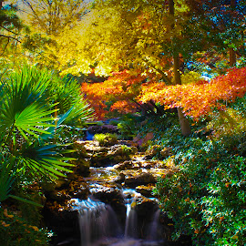 Japanese Gardens Fall Color 8 by Kevin Whitaker - City,  Street & Park  City Parks ( japan, color, fort worth, texas, garden )