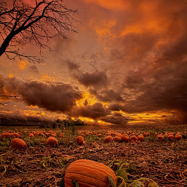 Waiting for the Great Pumpkin by Phil Koch - Landscapes Prairies, Meadows & Fields ( vertical, photograph, fine art, yellow, travel, leaves, halloween, love, sky, tree, nature, autumn, flowers, light, flower, orange, pumpkin, twilight, agriculture, horizon, portrait, environment, dawn, serene, outdoors, trees, floral, inspirational, natural light, wisconsin, ray, landscape, phil koch, spring, sun, photography, blue sky, horizons, inspired, office, clouds, park, green, back light, scenic, morning, farming, shadows, wild flowers, field, red, blue, color, sunset, peace, fall, meadow, landscapephotography, beam, earth, sunrise, landscapes, patch, mist, , colorful )