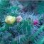 Spikey Cacti