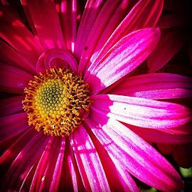 Pretty In Pink by Nancy Senchak - Instagram & Mobile iPhone