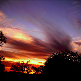 Sooner Or Later by Vince Scaglione - Landscapes Cloud Formations ( clouds, sky, silhouette, sunset, later, cirrus, formations, sundown, trees, weather, sooner, dusk )
