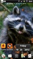 Screenshot of Raccoon live wallpaper