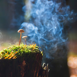 Smoke and mushrooms by Cristi Florea - Nature Up Close Mushrooms & Fungi ( smoke, mushrooms )