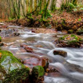 Autumn morning by The River by Siniša Biljan - Landscapes Forests
