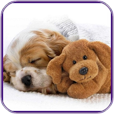 Dogs Jigsaw Puzzle