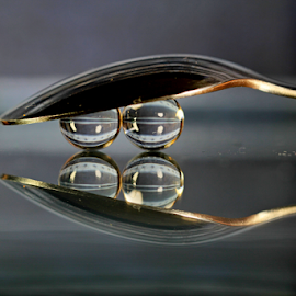 by Dipali S - Artistic Objects Other Objects ( reflection, sphere, cutlery, spoon, refraction )