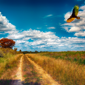 Along The Hiking Trail by Bill Tiepelman - Landscapes Prairies, Meadows & Fields ( dreamy, landscape, hiking, shrubs, flying, sky, blue sky, autumn, trail, puffy clouds, path, clouds, vulture, grass, green, rural, country, turkey vulture, field, bird, flight, saint charles, missouri, trees, busch wildlife )