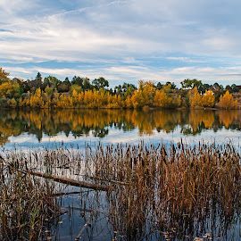 That Golden Reflection by James Martinez - Nature Up Close Trees & Bushes ( fall, color, colorful, nature )