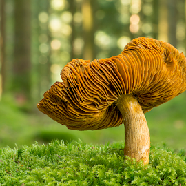The big one by Peter Samuelsson - Nature Up Close Mushrooms & Fungi