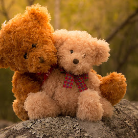Teddy Bear Love by Esther Visser - Artistic Objects Still Life