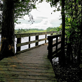 Bridge over water Dam B by Cathy Orlowski - Landscapes Forests