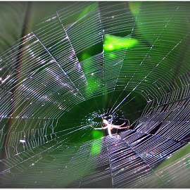 Black Hole by Kwong Chung-man - Nature Up Close Webs