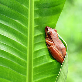 by Hendar Vw - Animals Amphibians