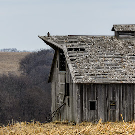 Tired Old Barn by Dallas Brixey - Buildings & Architecture Decaying & Abandoned (  )
