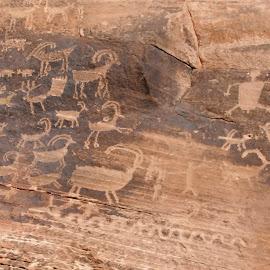 clear creek petroglyphs, 2 by Debbie Theobald - Nature Up Close Rock & Stone ( natural light, nature, arizona, petroglyphs, rocks,  )