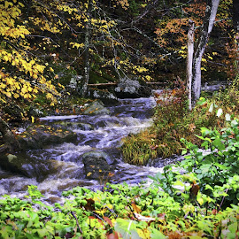 Stream by Diane Clontz - Novices Only Landscapes ( stream, vacation, connecticut, fall colors, waterfall )