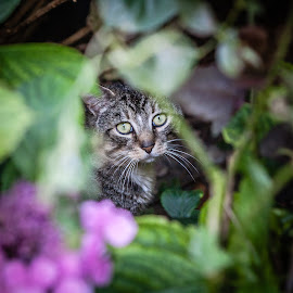 Visitor by Ozlem Mehmet - Animals - Cats Portraits ( neko, cat, pet, kedi, chat, feline, kitty )