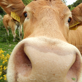 WhaaaT? ;P by Ausra A. - Novices Only Pets ( call her daisy, moooo, cow, xoxo, field trip )