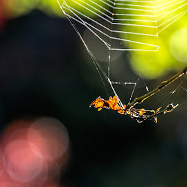 light and colours by Vibeke Friis - Nature Up Close Webs ( collours, bokeh )