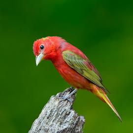 by Joel D. Eade - Animals Birds
