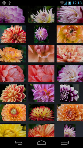 玩攝影App|Dahlia Wallpaper免費|APP試玩