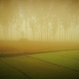 asha......morning by Fahim Zisan - Instagram & Mobile Android ( ku, winter )