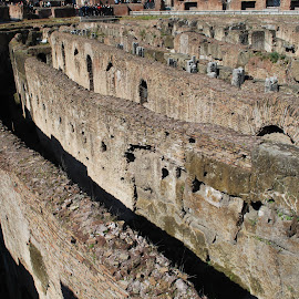 The Colosseum by David Gilchrist - Buildings & Architecture Public & Historical ( flavian amphitheatre, history, colosseum, rome, italy )