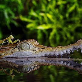by Adi Parmana - Animals Reptiles (  )