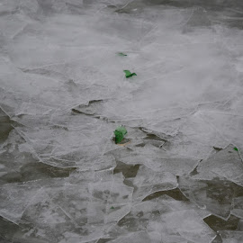Green Ice Chips by Tammy Modic - Nature Up Close Water ( colorful, mood factory, vibrant, happiness, January, moods, emotions, inspiration )